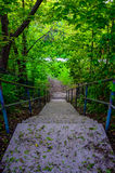 Staircase leading down to a path though a forest Stock Image