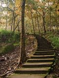 Staircase Leading to the trees in fall season Stock Image