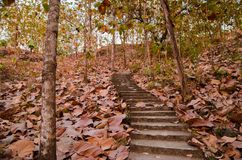 Staircase Leading to the trees in fall season Stock Photo