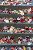 Staircase with leaves in autumn Royalty Free Stock Image