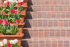 Staircase Lined With red and white tulips Flowers. Stock Photography