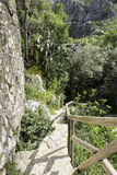 Staircase in nature Royalty Free Stock Photo