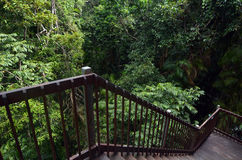 Staircase overlook the canopy of Daintree National Park Queensland, Australia. Staircase overlook the canopy of Daintree National Park in the tropical north of royalty free stock photos