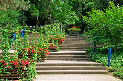 Staircase in the  park Royalty Free Stock Images