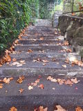 The staircase of the property in autumn is dangerous with the dead leaves. Stock Images