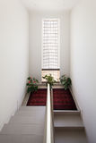 Staircase with red carpet. Interior of a building, staircase with red carpet and plants Royalty Free Stock Image
