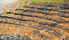 A staircase of stone with many autumn leaves Stock Photos