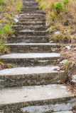 Staircase. Stone. way up the hill in forest stock photography