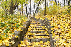Staircase strewn with yellow leaves Royalty Free Stock Photos