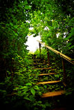 Staircase in a thicket. Wooden staircase in a forest thicket Stock Photography