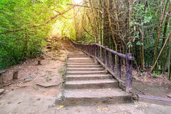 Staircase to the waterfall in deep foest Royalty Free Stock Photos