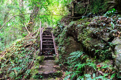 Staircase to the waterfall in deep forest Royalty Free Stock Images