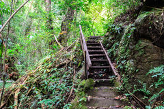 Staircase to the waterfall in deep forest Stock Photo
