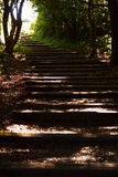 Staircase up the hill. In the forest on island Fur Stock Image