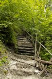 Staircase in the wilderness of nature next to the reservoir. royalty free stock image