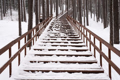 Staircase in a winter forest Stock Image