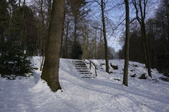 Staircase in winterly forest Stock Image
