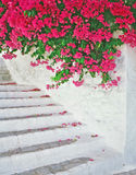 Staircase With A Flowers Stock Photography