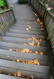 Staircase with wood handrails,covered with leaves Stock Photography