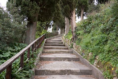 The staircase in the woods. Stairs in an urban park surrounded by trees Stock Photos