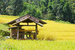 Staircase yellow rice field in Chiang Mai, Thailand Stock Photos