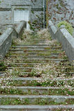 Stairs. Flowers on stairs, England Stock Image