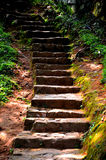 Stairs. To the woods from the road Stock Photography