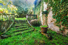 Stairs in an abandoned garden in Tuscany Stock Image
