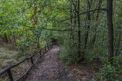 Stairs in the autumn forest Stock Photos