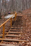 Stairs in autumn forest Royalty Free Stock Photography