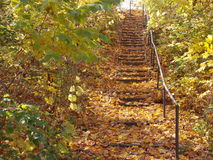 Stairs in autumn stock images