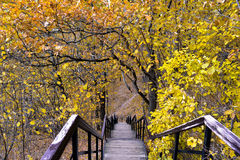 Stairs in the autumn. Autumn landscape with the stairs Royalty Free Stock Photography