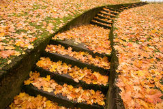 Stairs with autumn leaves Royalty Free Stock Photo
