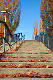 Stairs with autumn leaves Stock Photo