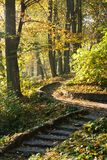 Stairs in autumn park. Sunny autumn landscape Royalty Free Stock Photos