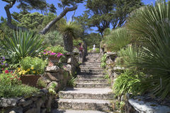 Stairs in beautiful garden. Stairs in Abbey Garden, Tresco Isles, Scilly Islands, England. The gulf stream is responsible for the warm climate Royalty Free Stock Photography