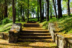 Stairs in a city park covered in autumn leaves Stock Photos