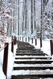 Stairs in a cold winter day Royalty Free Stock Image