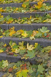 Stairs covered with autumn leaves Stock Photo