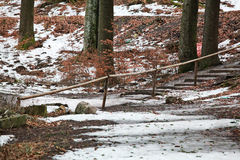 Stairs covered with black ice in winter forest Royalty Free Stock Images