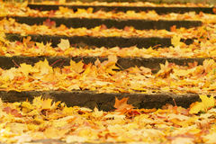Stairs covered with fallen maple leaves in october Royalty Free Stock Photos