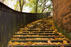 Stairs covered by leaves Royalty Free Stock Images