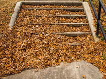 Stairs covered in leaves Royalty Free Stock Images