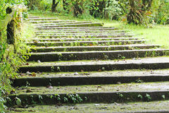 Stairs covered in plants Royalty Free Stock Photo