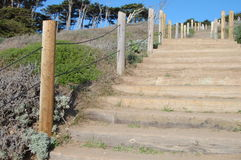 Stairs. Cut trees in front of City Hall San Francisco California on a sunny day Royalty Free Stock Photo