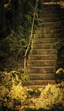 Stairs. Dramatic looking stairs in the garden Royalty Free Stock Photo