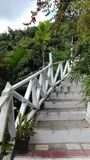 Stairs in an exotic forest. In Blue Mountains, Jamajca Stock Image