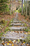 Stairs fitness trail in forest Stock Image