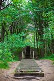 Stairs In Forest Stock Photo