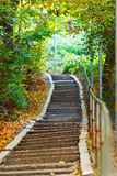 Stairs in forest Stock Photography